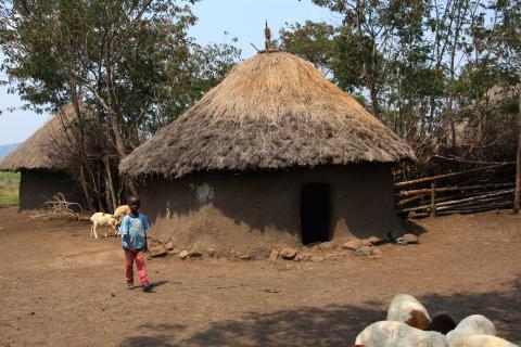 Familien Nkoba måtte selge alt kveget sitt for å dekke kostnadene til Charles Nkobas begravelse. Nå har de kun noen få sauer igjen. Foto: Kenneth Lia Solberg